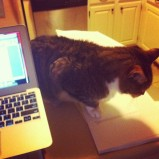 Tommy Six Toes, Esq. supervised the final stages of thesis preparation.